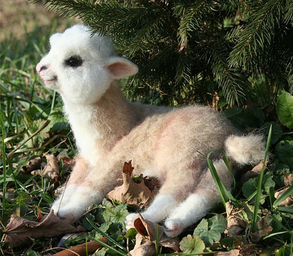 Who knew Alpacas would be so cute? - image 2